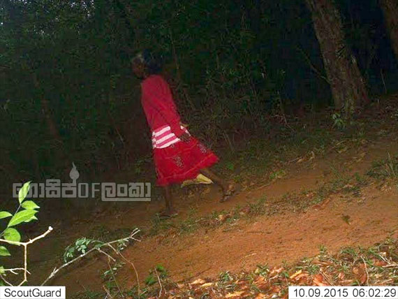 Mysterious woman caught on camera in Wilpaththu Forest