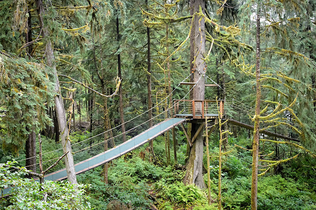 Observation Platform at Alaska Rainforest Sanctuary