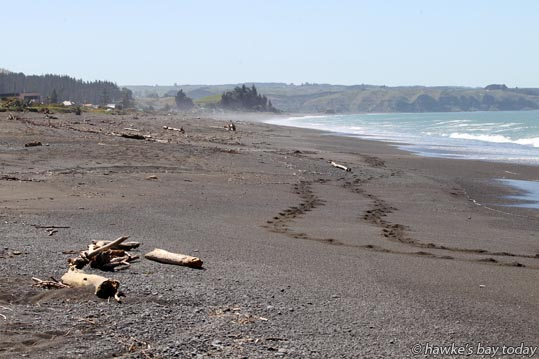 Whirinaki Beach, Whirinaki, north of Napier, looking north from near the T-intersection in the middle of Whirinaki Rd. photograph