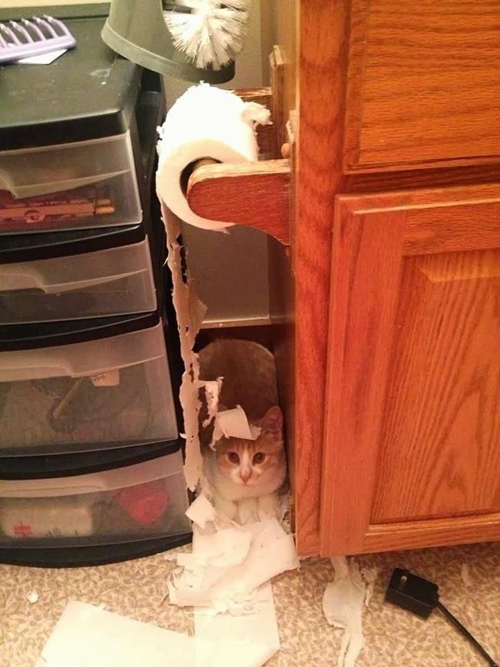 Кот и туалетная бумага - 1