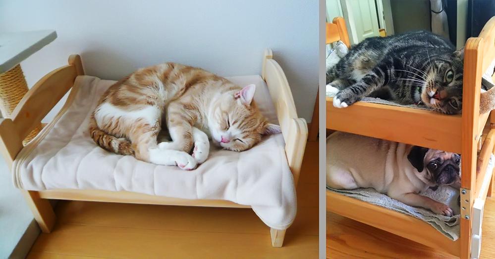 Donos de animais transformam cama de bonecas ikea em camas for Camas de ikea
