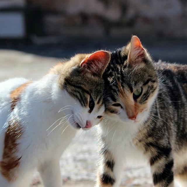 Cat-Picture-Gambar-kucing-comel