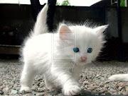 sweet cats 4U