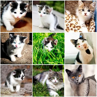 Fotografías de gatitos