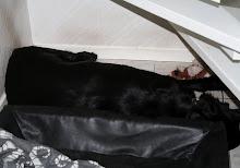 Zorro 2012