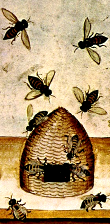 http://fr.wikipedia.org/wiki/Ruche