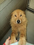 7/28/ West Virgina Shelter BEGGING FOR HELP
