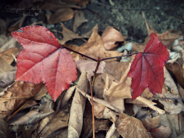 Dark red leaves