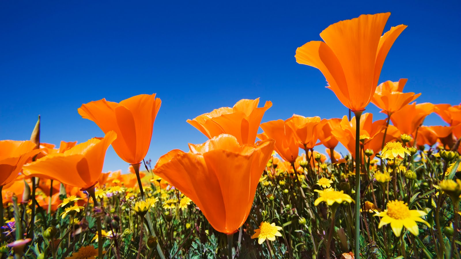http://4.bp.blogspot.com/-JNvY9Olr7fQ/Tah-pW6MVeI/AAAAAAAAGYs/mqUND5_CSLs/s1600/flowers-wallpaper_1920x1080_83710.jpg