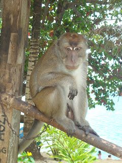 the nice monkey at Guisi Clearwater