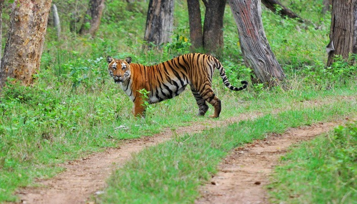 Bandipur National Park - Weekend Getaways from Bangalore