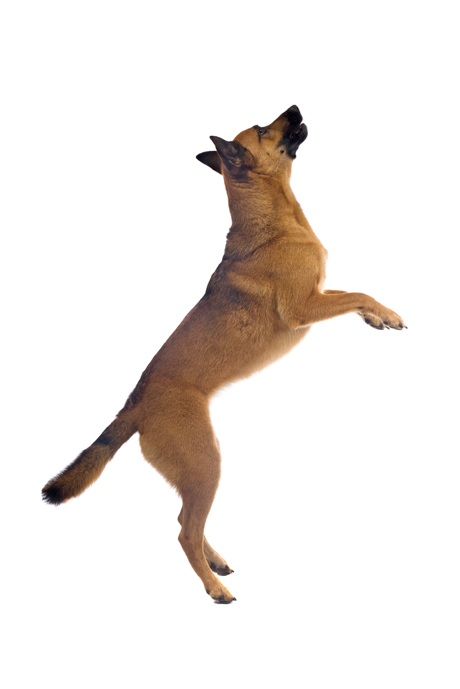 A Dog 39 S Life How To Stop Your Dog From Jumping Week Two