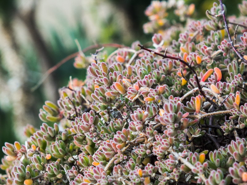 Finepix - Macro photography - fiori di inverno