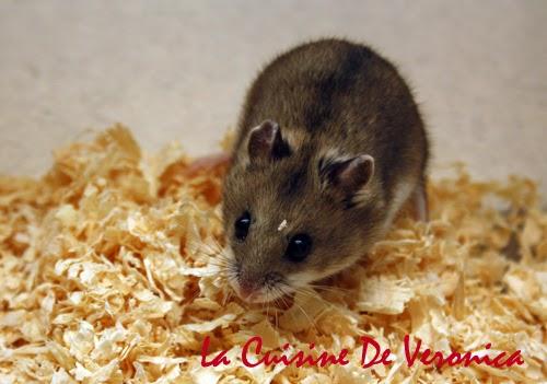 La Cuisine De Veronica, V女廚房, 倉鼠, Hamster, 中國倉鼠, Chinese Hamster