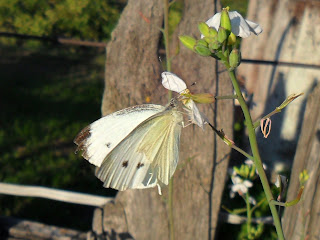 vkusniogorod – бабочка