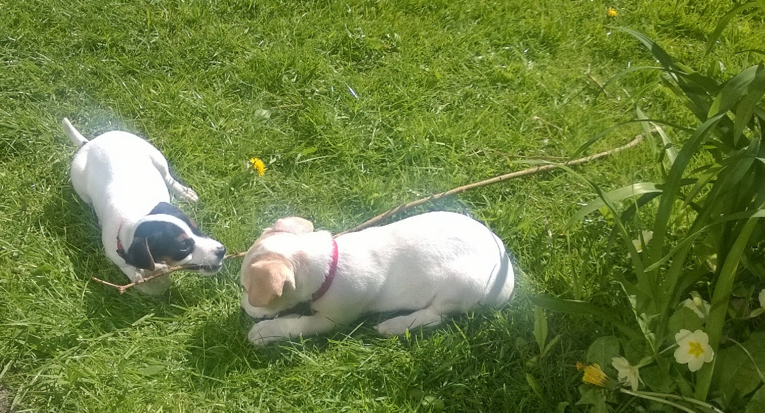 Enjoying their time in the sun with a non-attached stick