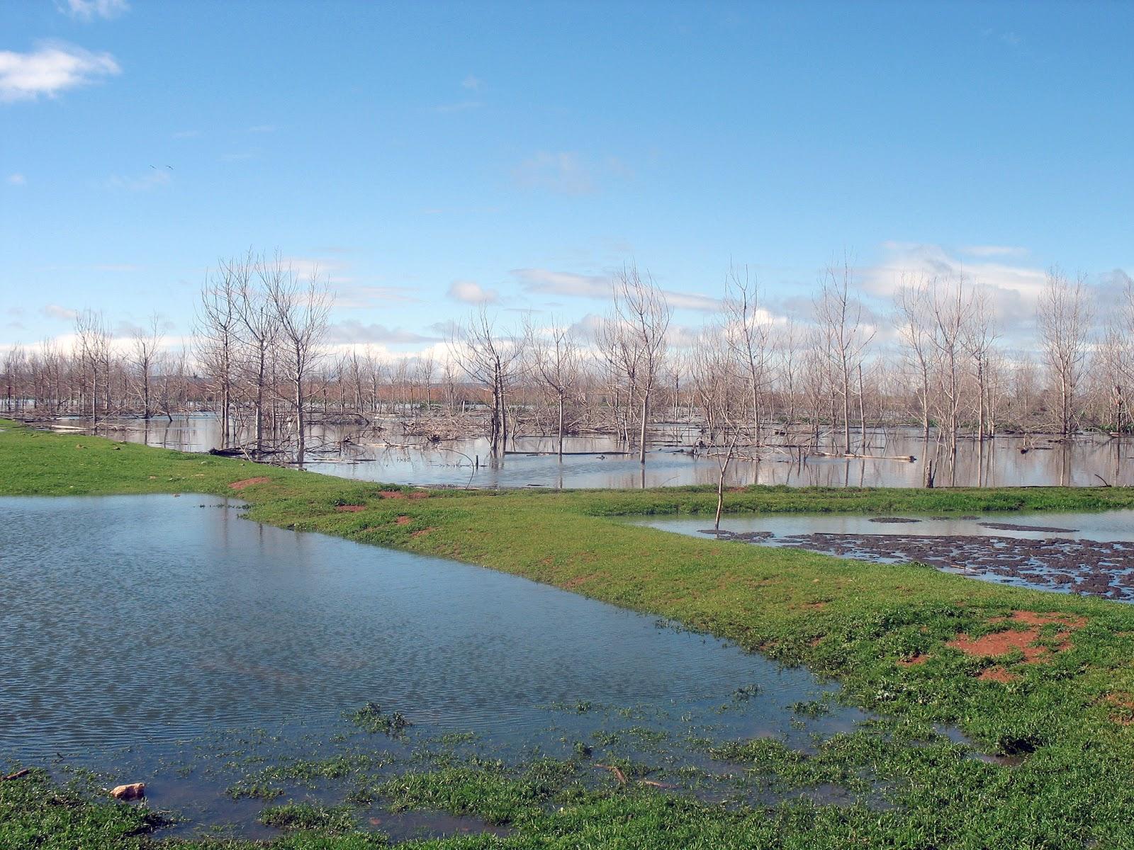 Manzanares digital aguas residuales en parcelas aleda as for Depuradora aguas residuales