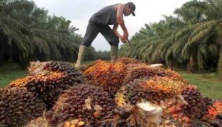 Pesaing Baru di Industri Sawit Indonesia, Brazil
