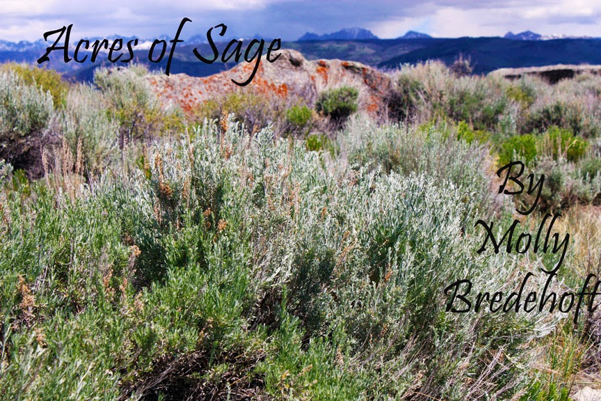 Acres of Sage