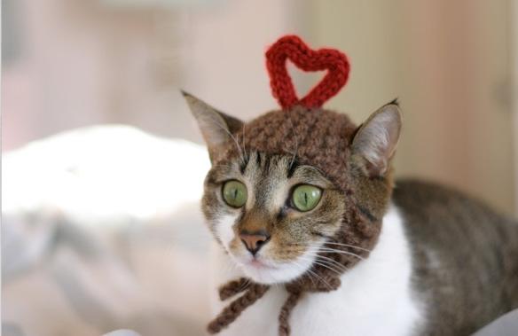 """Résultat de recherche d'images pour """"chat écharpe"""""""