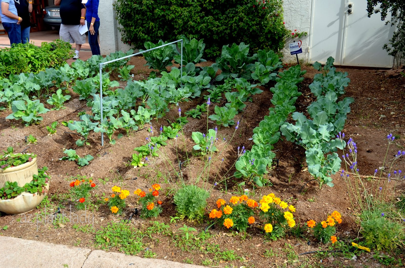 By The Way, Do Know Why The Homeowner Has Planted Flowers At The End Of  Each Vegetable Row?