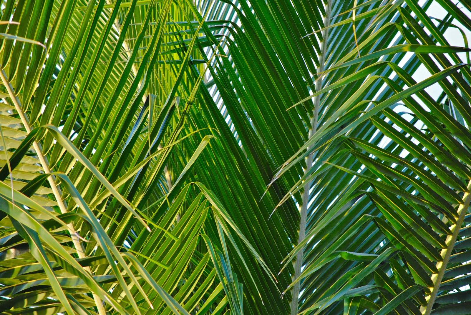 Waving Palm Branches | www.imgkid.com - The Image Kid Has It!