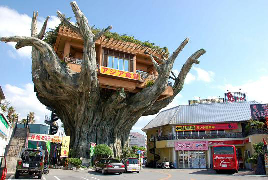 This Is Literally A Tree House. It Is Located In Japan And Above A Banyan  Tree A Small Place Functions As A Restaurant. This Huge Tree Supports The  Entire ...