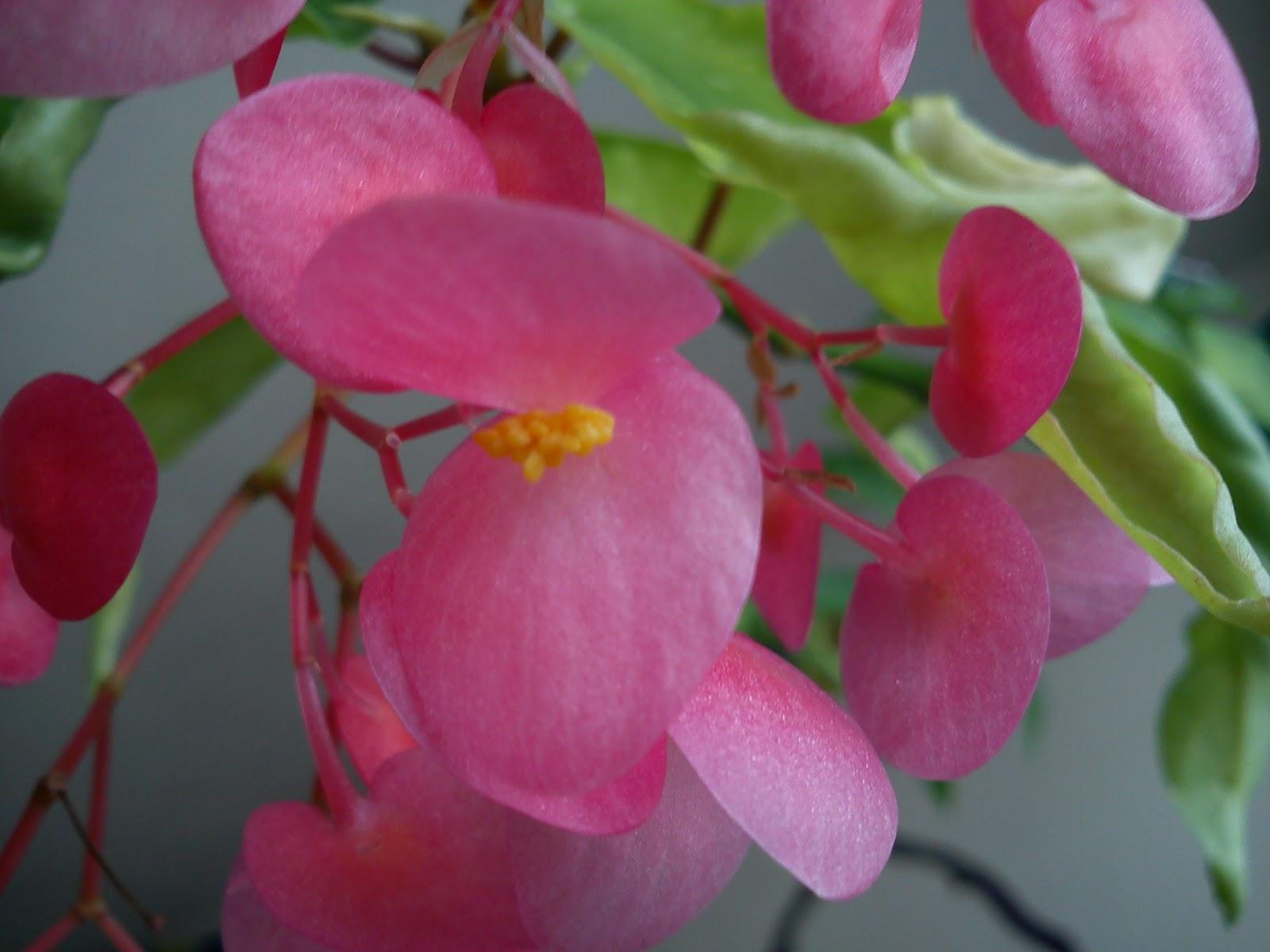 Les orchid es bucoliques princesses vertes et autres - Tout sur le bambou ...