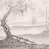 ¨Un árbol viejo y sabio¨