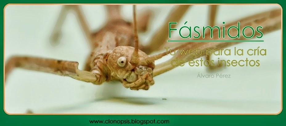 CLONOPSIS- Tu web para la cría de fásmidos
