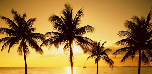 Sunrise Palm Trees Scenery Wallpaper.