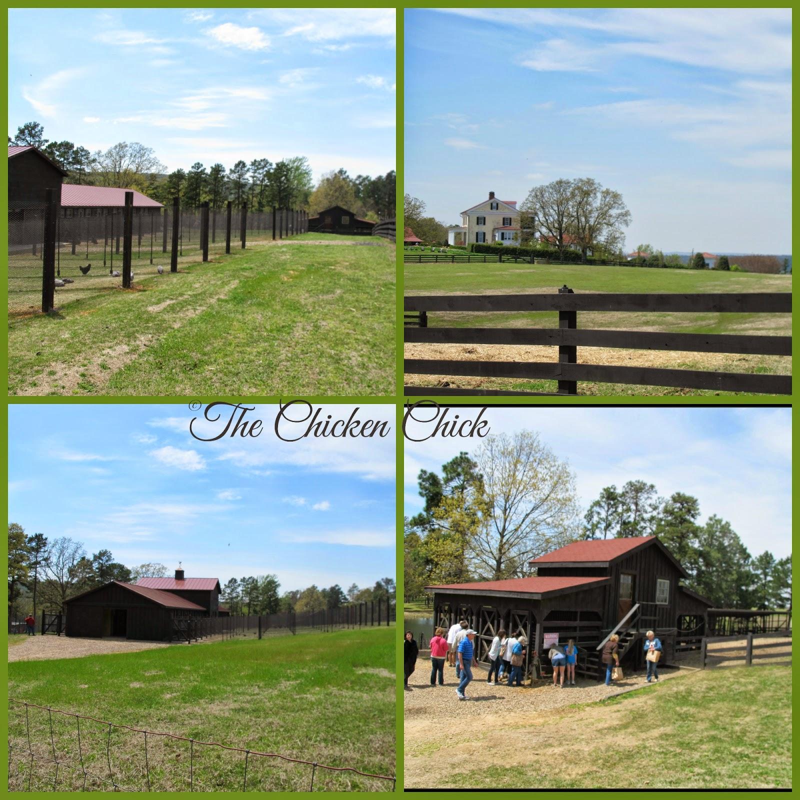 P Allen Smith's Chicken Barn at Moss Mountain Farm