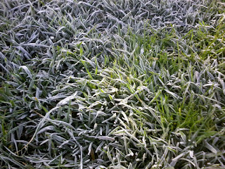 heavy frosts