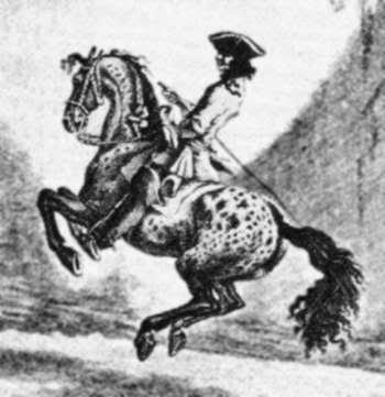 Jennet de Johann Elias Ridinger