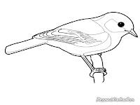 Mewarnai Gambar Burung Gelatik Batu