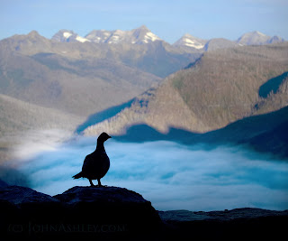 Grouse above foggy McDonald Valley morning (c) John Ashley