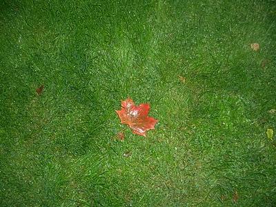 blött höstlöv på grön gräsmatta. foto: Reb Dutius