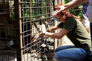 Chief vet Karmele meets Kiki the orangutan