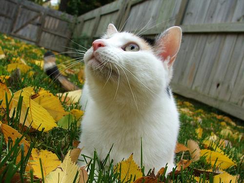 Photos of feline acne