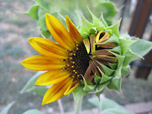 Sunflowers On Crooked Creek!