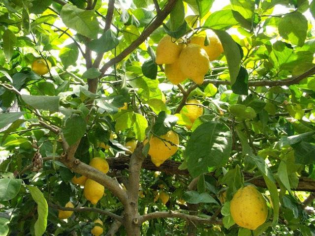 Benvenuti nel giardino segreto dell 39 anima il giardino for Pirus pianta