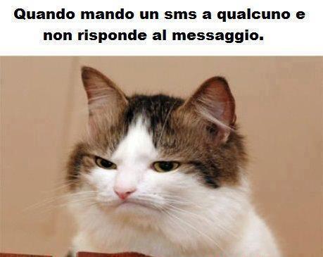 I Gatti Più Divertenti Del Web