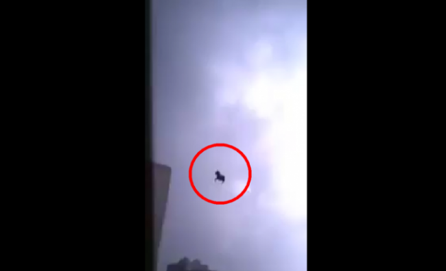 Fake Flying Horse Video Exposed.