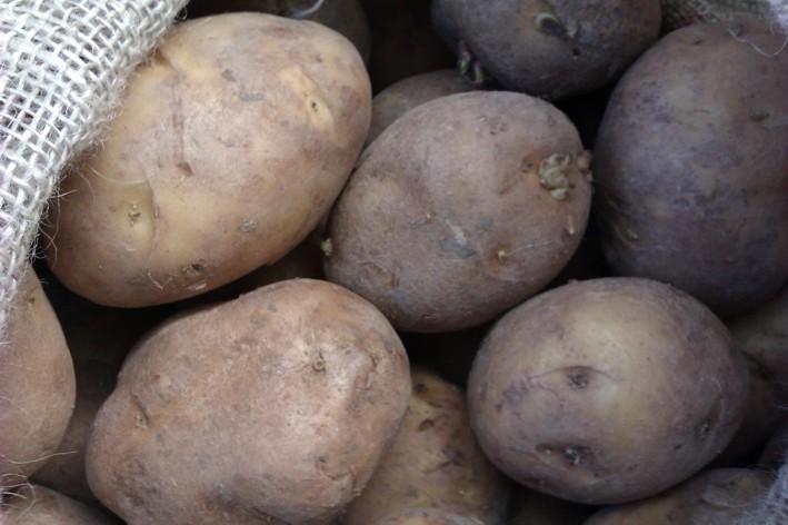 Como sembrar patatas ecohuertos zaragoza for Como cultivar patatas
