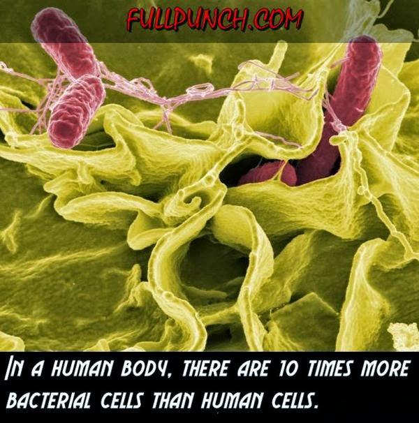 Interesting Facts about Human Body (23 pics), amazing facts, human body facts