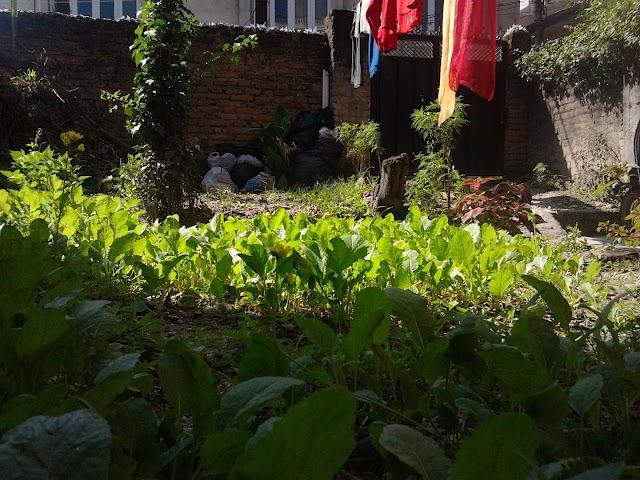 Gardening, Garden Photography