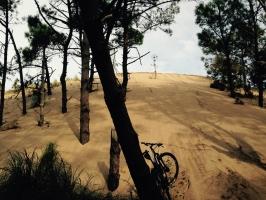médanos que limitan el bosque y el mar