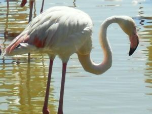 Disabled Travel - Wetland Bird Park Parc Ornithologique, Camargue Flamingo