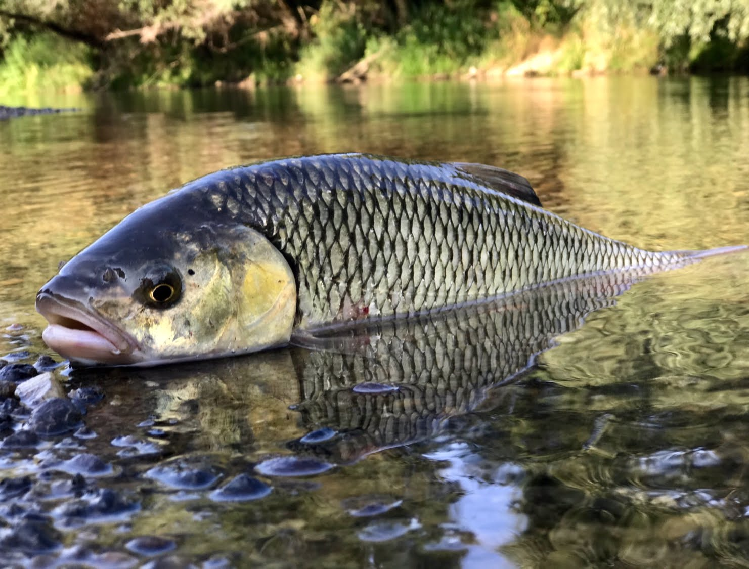 """Energofish """"halas fotó"""" 2018  Domolykó kategória  I. hely"""