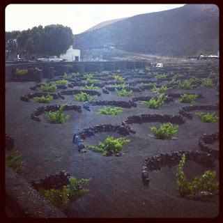 An example of a Vineyard in Lanzarote